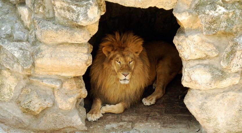 Daniel 6: Daniel en el foso de los leones
