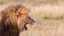 Cómo resistir a Satanás, el león rugiente