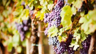 La Fiesta de Tabernáculos: una cosecha abundante