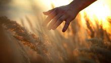 El Último Gran Día: la cosecha final