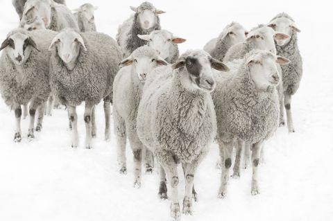 Parábola de las ovejas y los cabritos